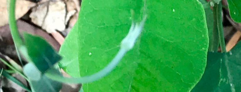 Elementals leaf